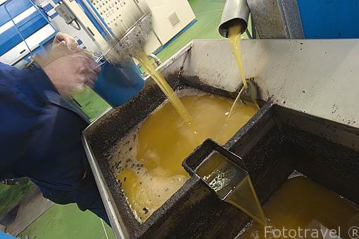 Despues de varios filtrados se extrae el aceite de oliva. Olivarera Ntra. Sra. de Luna. VILLANUEVA DE CORDOBA. Comarca de Los Pedroches. Cordoba. España