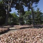 Jardin de Flores. Jardin historico artistico (s. XVIII) El Capricho. Madrid capital. España