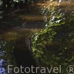 Reflejo en el Lago. Jardin historico artistico (s. XVIII) El Capricho. Madrid capital. España