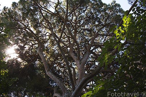 Variada vegetación arborea crece en el Jardin historico artistico (s. XVIII) El Capricho. Madrid capital. España
