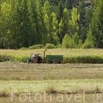 Campesino y tractor en un campo de maiz. Cerca del pueblo de TRAMACASTILLA. Teruel. España