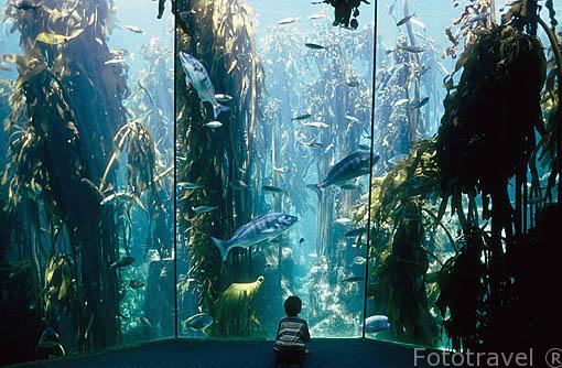 """Acuario """"Two Oceans"""" con diferentes peces, plantas y tiburones de la zona. En el puerto de """"Victoria & Alfred Waterfront"""". CIUDAD EL CABO. Surafrica"""