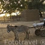 Carro y burros. Pueblo de DEGUEMBERE. Rio Senegal. Norte de Senegal