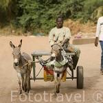 Carro y burros en una calle sin asfaltar de DAGANA, poblacion situada junto al rio Senegal. Senegal