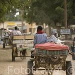 Carros como vehiculos de transporte en una calle sin asfaltar de DAGANA, poblacion situada junto al rio Senegal. Senegal