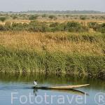 Canoa y paisaje sobre el rio Senegal y extensiones de cañaverales junto a las orillas del rio Senegal. Norte de Senegal