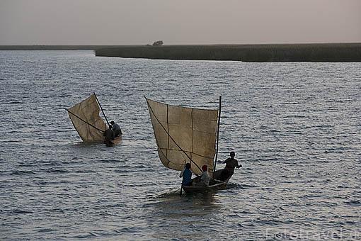 Canoas con velas incorporadas surcando las aguas del rio Senegal. Norte de SENEGAL