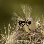 Una hormiga recogiendo una semilla. Madrid. España