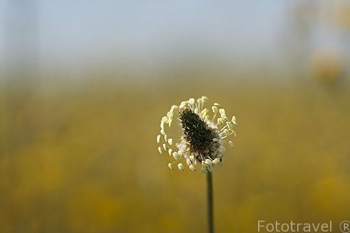 Flor en el campo. Ajalvir. España
