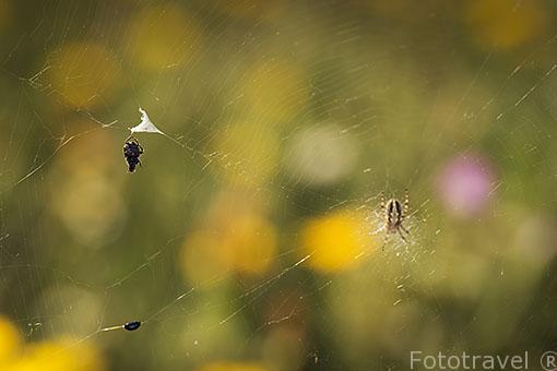 Araña en su tela. Madrid. España