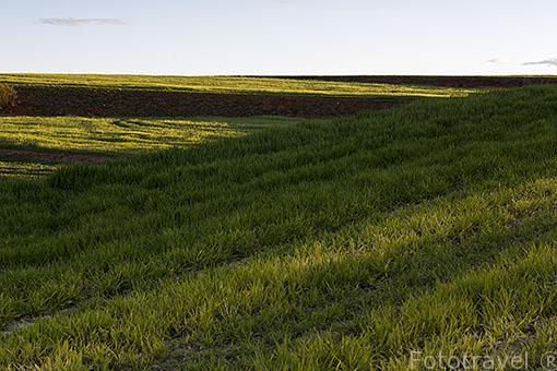 Campos de cultivo. Ajalvir. Madrid. España