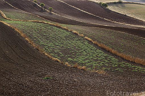 Campos de agricultura en verano. Ajalvir. Comunidad de Madrid. España