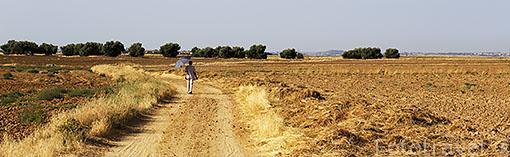 Campos y senderista en verano.Ajalvir