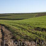 Tierras de cultivo. Paracuellos del Jarama. Madrid. España