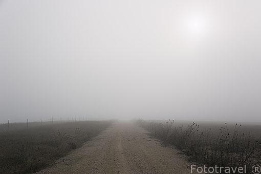 Camino con niebla. Paracuellos del Jarama. Madrid. España