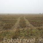 Campos de cultivo en invierno. Paracuellos de Jarama