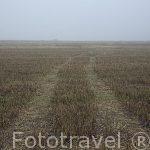 Campos de cultivo y huellas de tractor