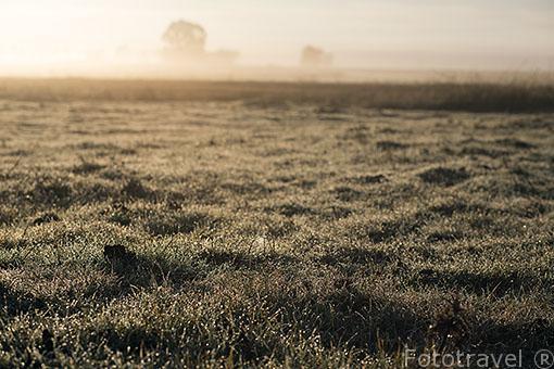 Campos de cultivo al amacener en Paracuellos