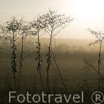 Arbustos al amanecer