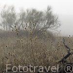 Arbustos y campos en la niebla