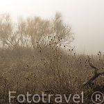 Arbustos en la niebla en Paracuellos
