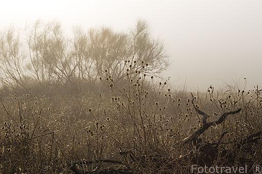 Arbustos en la niebla. Paracuellos del Jarama