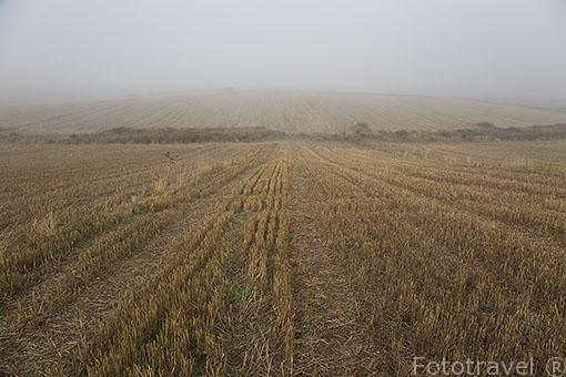Paracuellos del Jarama y campos de cereales