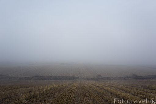 Paracuellos del Jarama y campos entre la niebla