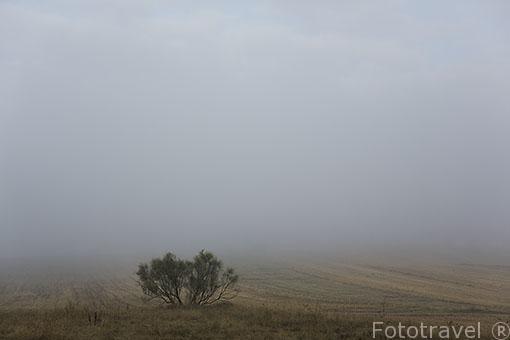 Paracuellos del Jarama y un arbusto entre la niebla