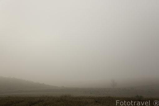 Paracuellos del Jarama y campo entre la niebla