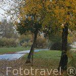 Pista ciclista y arbol en otoño. Madrid