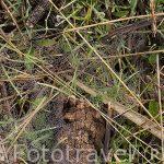 Hierbas y rocio en una tela de araña.